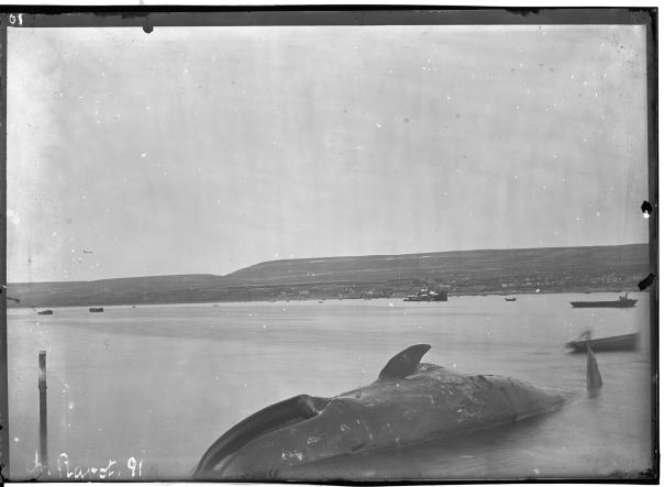 Foto: Charles Rabot 1884